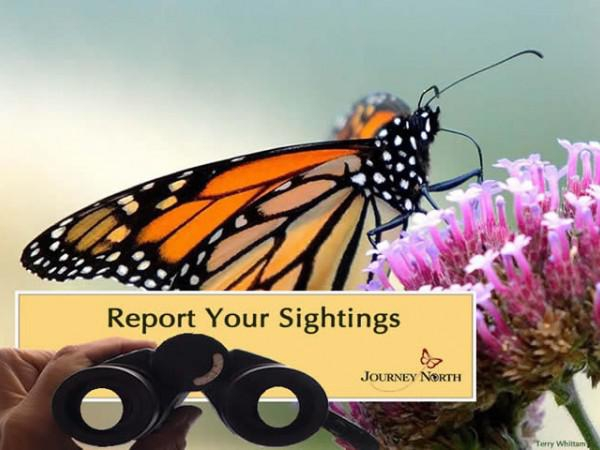 Help track monarch butterfly through the Journey North website