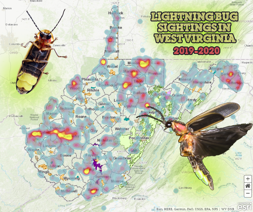 Firefly sightings reported in WV in 2019 and 2020